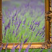 Lavender Frame Poster