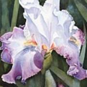 Lavender Light Poster