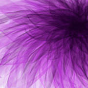 Lavender Spiral Poster