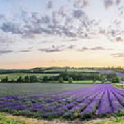 Lavender Sunset Panorama Poster