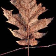 Leaf 22 Poster