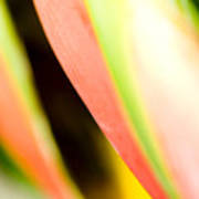Leaf Abstract Poster
