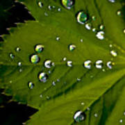 Leaf Covered In Raindrops Poster