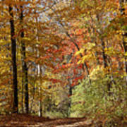 Leaf Covered Path Poster by Kathy DesJardins