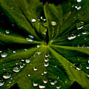 Leaf Covered With Water Droplets Poster
