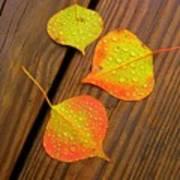 Leaf Drops 2 Poster