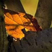 Leaf In Fork Poster