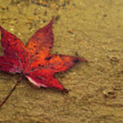 Leaf In The Rain Nature Photograph Poster