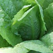 Leaf Lettuce Part 3 Poster