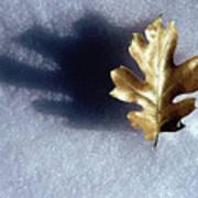 Leaf On Snow Poster