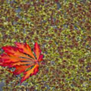 Leaf Pond Poster