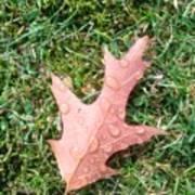 Leaf Resisting The Rain Poster