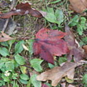 Leaf Standing Out In A Crowd Poster