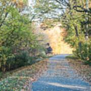 Leaf-strewn Path Poster