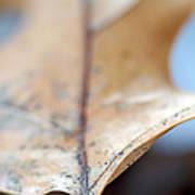 Leaf Study Vii Poster
