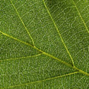 Leaf Textures Poster