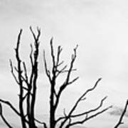 Leafless Tree Poster