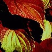 Leafy Melange Poster