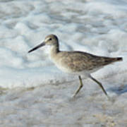 Least Sandpiper at Stump Pass Poster