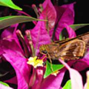 Least Skipper Butterfly Poster