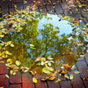 Leaves And A Puddle Poster