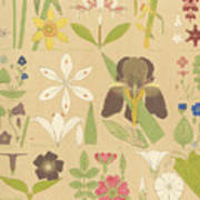 Leaves And Flowers From Nature Poster