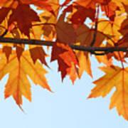 Leaves Autumn Orange Sunlit Fall Leaves Blue Sky Baslee Troutman Poster