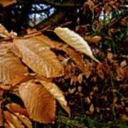 Leaves In Late Autumn Poster