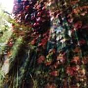 Leaves Light Streaming Poster