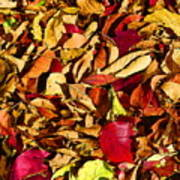 Leaves Of Autumn Poster