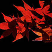 Leaves Of Red Poster