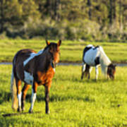Leaving The Chincoteague Ponies Poster