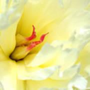 Lemon Chiffon I Poster