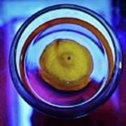 Lemonade In Blue Poster