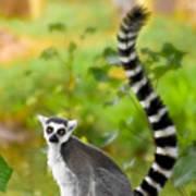 Lemur Lemur Poster