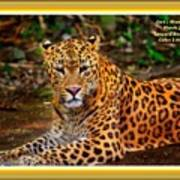 Leopard Beauty Catus 1 No. 1 L A With Decorative Ornate Printed Frame Poster