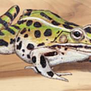 Leopard Frog No 1 Poster