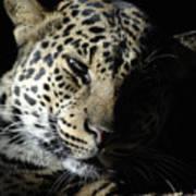Leopard II Poster