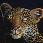 Leopard In The Dark Poster by Lorraine Foster