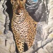 Leopard On The Rocks Poster