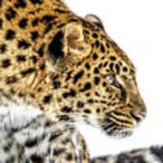 Leopard Profile Poster