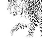 Leopard Spots Black And White Poster