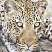 Leopard Stare Poster