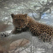 Leopard Tree Hugger Photo Collage Poster