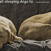Let Sleeping Dogs Lie Poster by Gwyn Newcombe