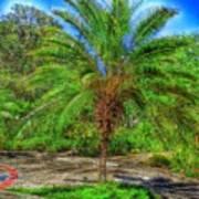 Leu Gardens Palm Poster