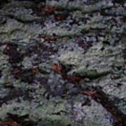 Lichen Texture Poster