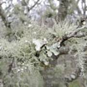 Lichens In The Plums Poster