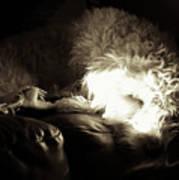 Light As He Tries To Sleep Poster