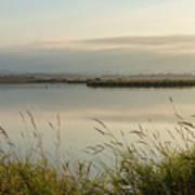 Light Falling Softly On The Marsh Poster